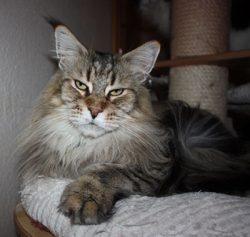 KHUN_2 Thunderballs Tiger Lilly DVM DSM